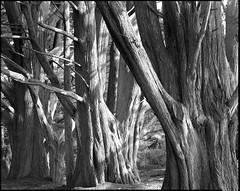Cypress Trio photo by Summicron20/20