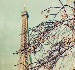 Sous le ciel de Paris photo by Marga Corameta
