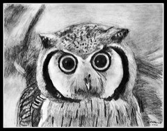 Owl - Pencil Drawing by STEVEN CHATEAUNEUF 2012 - Photo Of This Drawing Also by STEVEN CHATEAUNEUF photo by snc145