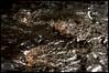 8250952681_9ec9b4d132_t