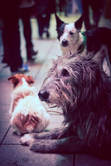 Two and a half Dogs photo by Alan Travers