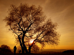 Mother and Son under a Willow Tree watching Sunset photo by Batikart