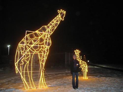Zoolights @ Calgary Zoo