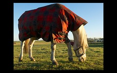 Horse with winter jacket photo by Mark-Crossfield
