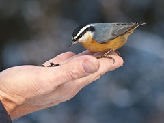 A bird in the hand is worth ... photo by annkelliott