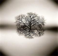 L'arbre boule photo by joel lintz