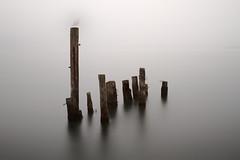 Pillars (Seagull Photobomb) photo by John Westrock