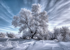 Hoar Frost - HDR #5 photo by Kirchmeier