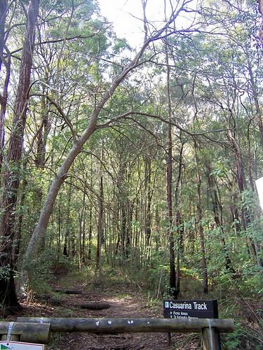 Casurina Track Rumbalara Reserve Gosford