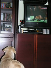 watching the show dogs