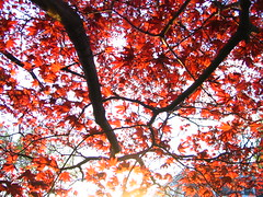Red Tree Sunset