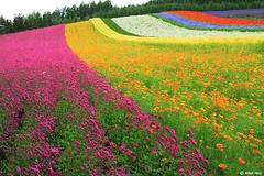 Colorful Garden photo by AllenHsu