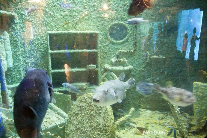 有趣的魚群、船屋造景及玻璃映射的景觀窗外人物
