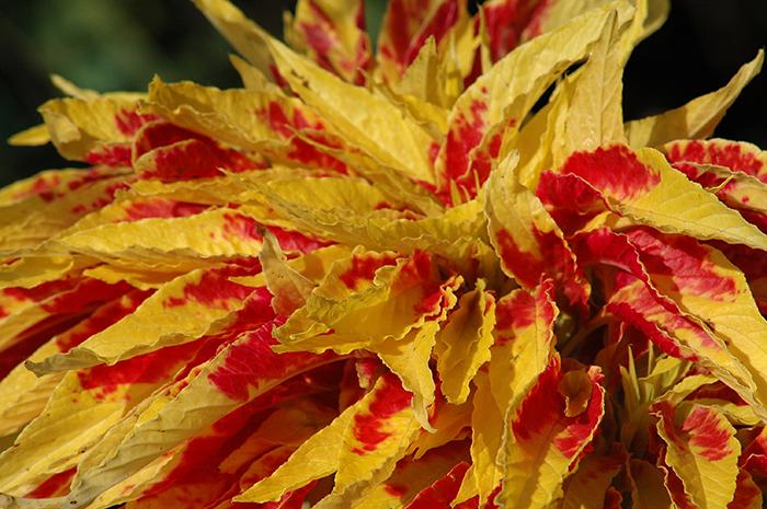 Regent's Flower 2 :: Click for previosu photo