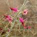 Flower (3821)
