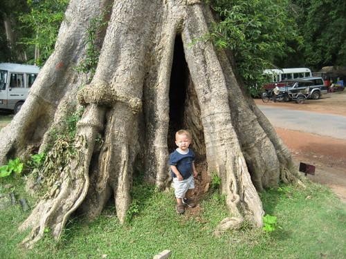 angus_tree_1