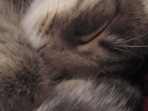 Nukkuva Sophie 1