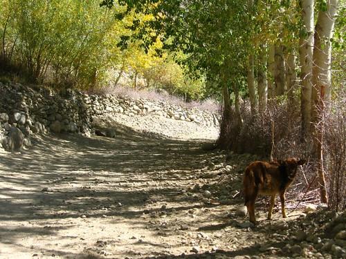 Langar, Tajikistan / タジキスタン、ランガール村