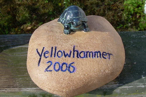 Turtle award