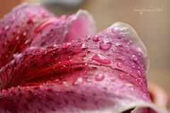 Rain photo by Gaviotita