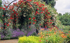 Royal National Rose Society Gardens - RNRS - The Gardens of the Rose, Hertfordshire, England   Red rose covered pergolas (12 of 12) photo by ukgardenphotos