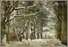 walking through a winter wonderland photo by rafischatz... www.rafischatz-photography.de