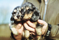 Gorgeous Puppies - puppy love on film photo by Trojan_Llama