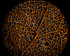 Neurons photo by smacdaddy (Scott MacInnis)