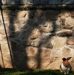 1185 Waiting for Alyssa photo by Nebojsa Mladjenovic