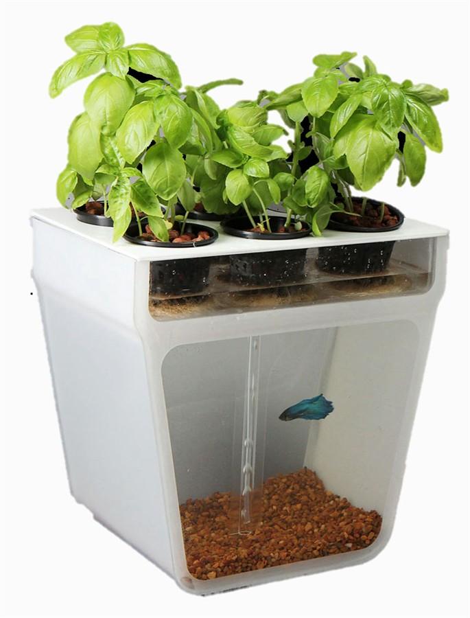 大自然革新!植物与动物的自主生态循环箱