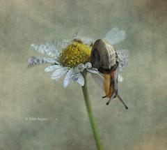 A un paso de la primavera...... photo by .... belargcastel ....