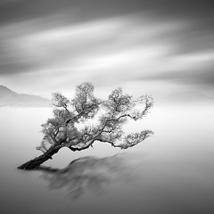 Water Tree 6 photo by Moises Levy L