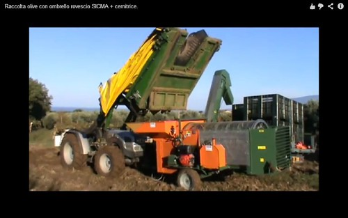 olive harvesting machine07