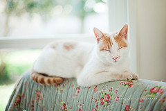 White, red and sleepy photo by | Les Hirondelles |