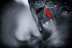 Little Leaf photo by hotpotato70