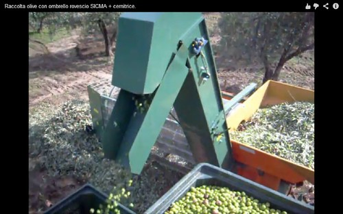 olive harvesting machine08