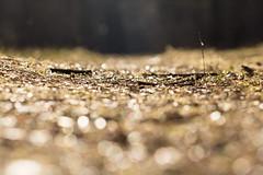 Die ersten Sonnenstrahlen fallen auf den Waldboden photo by Gret B.