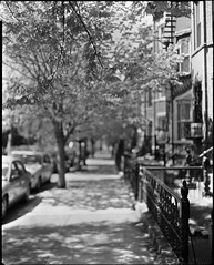 Park Slope Leaves shot Wide Open w/ 8x10 Camera and X-Ray Film photo by Shawn Hoke