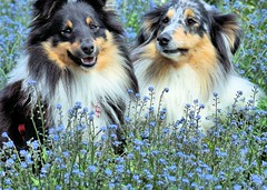 It really is surprising what you can find in the garden in springtime photo by Sheltie World