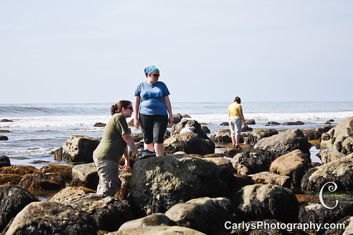 san diego tide pools (22 of 34).jpg