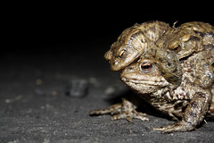 Toad Orgy photo by erikpaterson