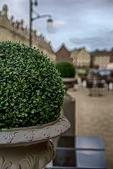 Boule de buis sur la place / Boxwood ball on the place  [Explore # 133 le 28 Avril 2013] photo by Napafloma-Photographe