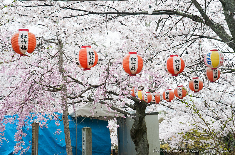 京都KYOTO,京都景點,京都煙雨,日本JAPAN,日本景點 @小蟲記事簿