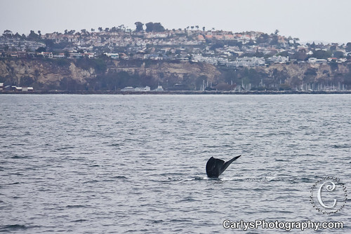 whale watching (7 of 10).jpg
