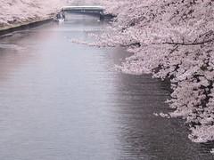船遊び photo by Neconote