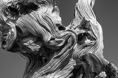 Texture photo by ShutterOak