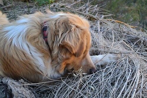 Trako - le meilleur chien du monde!