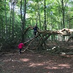 Fallen tree<br/>15 Oct 2016