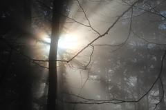 let the sun shine ✿ photo by cyberjani