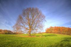 Stand Alone Version photo by blavandmaster
